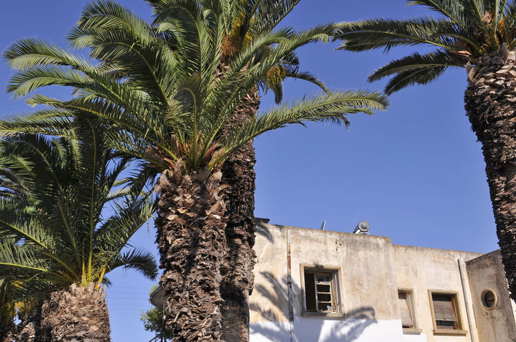 building and palm trees in Lakki, Leros Island, Dodecanese, Greece Abandonment Derelict Lakki Leros Island Mediterranean  Palm Tree Architecture Building Building Exterior Built Structure Clear Sky Greece Leros No People Outdoors Palm Tree Palm Trees Palmtree Rundown Tree Tree Trunk