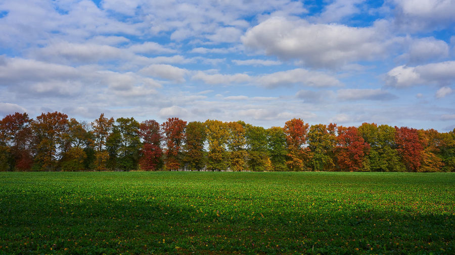 Scenic view of field and trees against sky