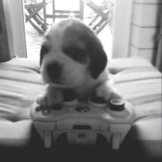 Xbox 360 Animals Dog Puppy