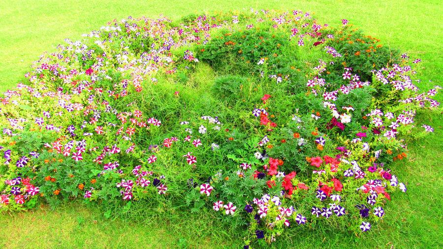 Allcolors Beauty In Nature Blooming Day Field Flower Flower Head Flowerbed Fragility Freshness Grass Green Color Growth Multi Colored Nature No People Outdoors Pink Color Plant Summer