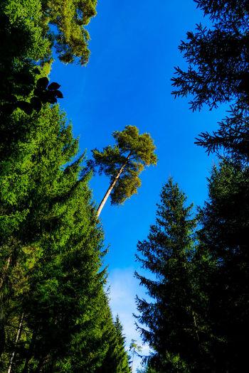 Tree Plant Blue