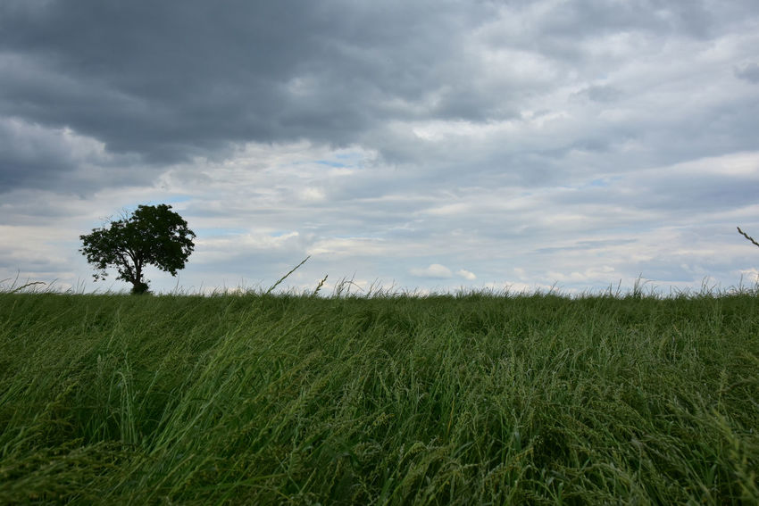 Field Tree Beauty In Nature Cloud - Sky Sky Grass Outdoors No People Zwickau