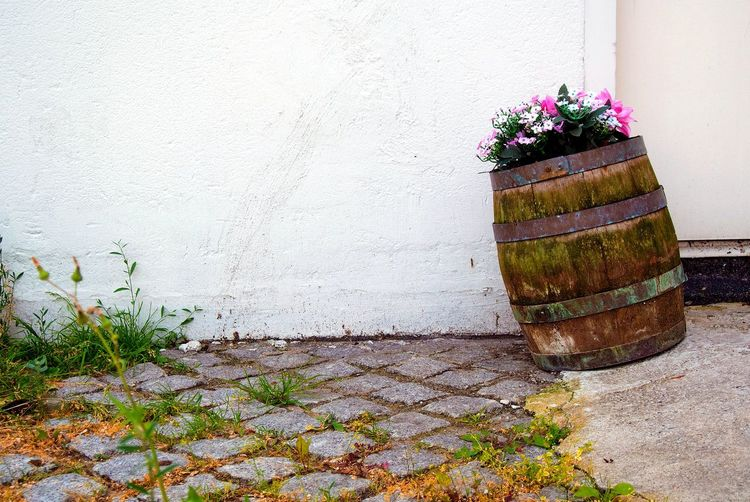 Copy Space Close Up Wall Flowers Flower Nature Day White Beauty In Nature Garden Built Structure Plants Potted Plant Plant No People Barrel Outdoors Growth Retaining Wall Flower Pot Decorative Urn Settlement Blooming Plant Life Botanical Botany Wall - Building Feature Flower Pot Old Cylinder