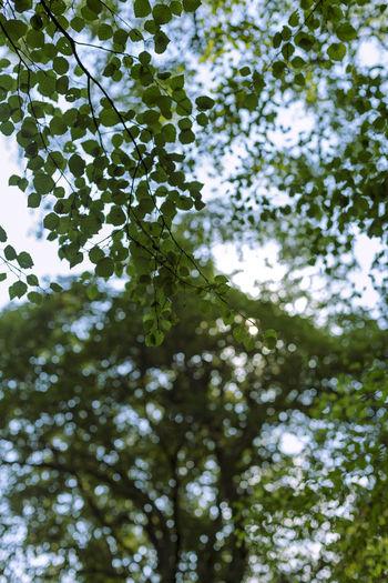 Tree Plant Low