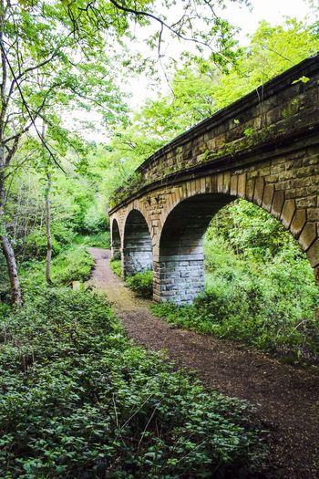 Bridge against trees in forest