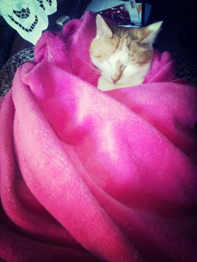 Lovemycat♥