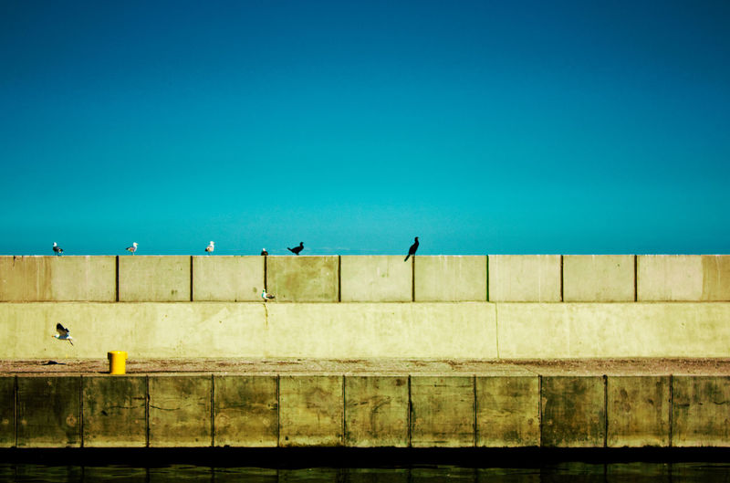 Low angle view of birds perching on building against blue sky