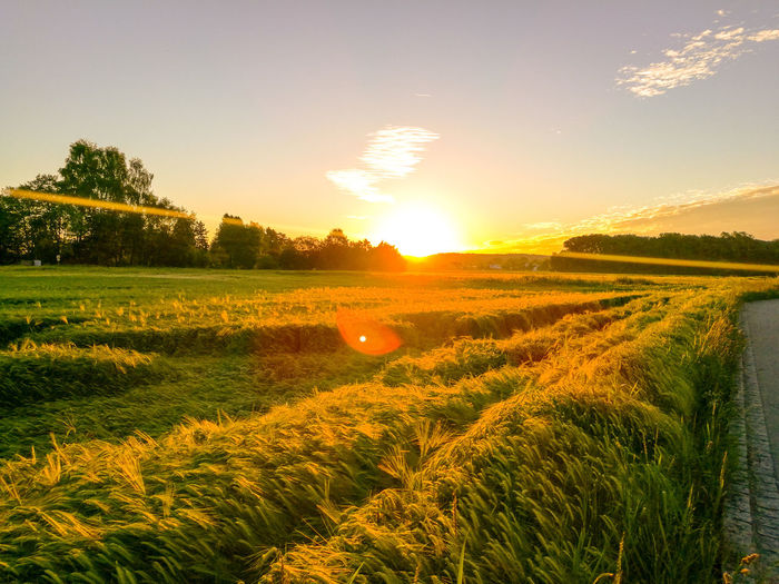 Beauty In Nature Environment Field Grass Idyllic Land Landscape Lens Flare Nature No People Orange Color Outdoors Plant Rural Scene Scenics - Nature Sky Sun Sunlight Sunset Tranquil Scene Tranquility