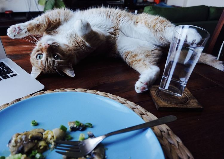 High Angle View Of Kitten Stretching By Food On Table