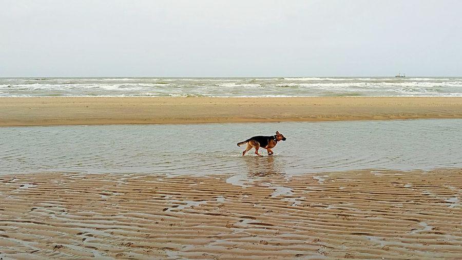 Beach Sea Dog