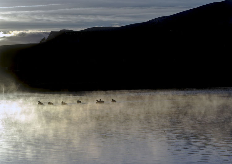 Canada geese swimming on a foggy lake in silhouette. Water Sky Silhouette Cloud - Sky Nature Animals In The Wild Waterfront Group Of Animals Animal Themes Scenics - Nature Beauty In Nature Reflection Bird Lake Animal Tranquil Scene No People Animal Wildlife Tranquility Outdoors Canada Geese Canada Geese On Water Fog Sunrise Silhouette