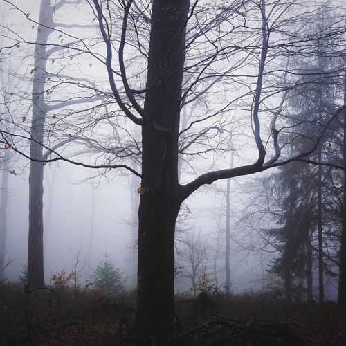 Ghost trees...