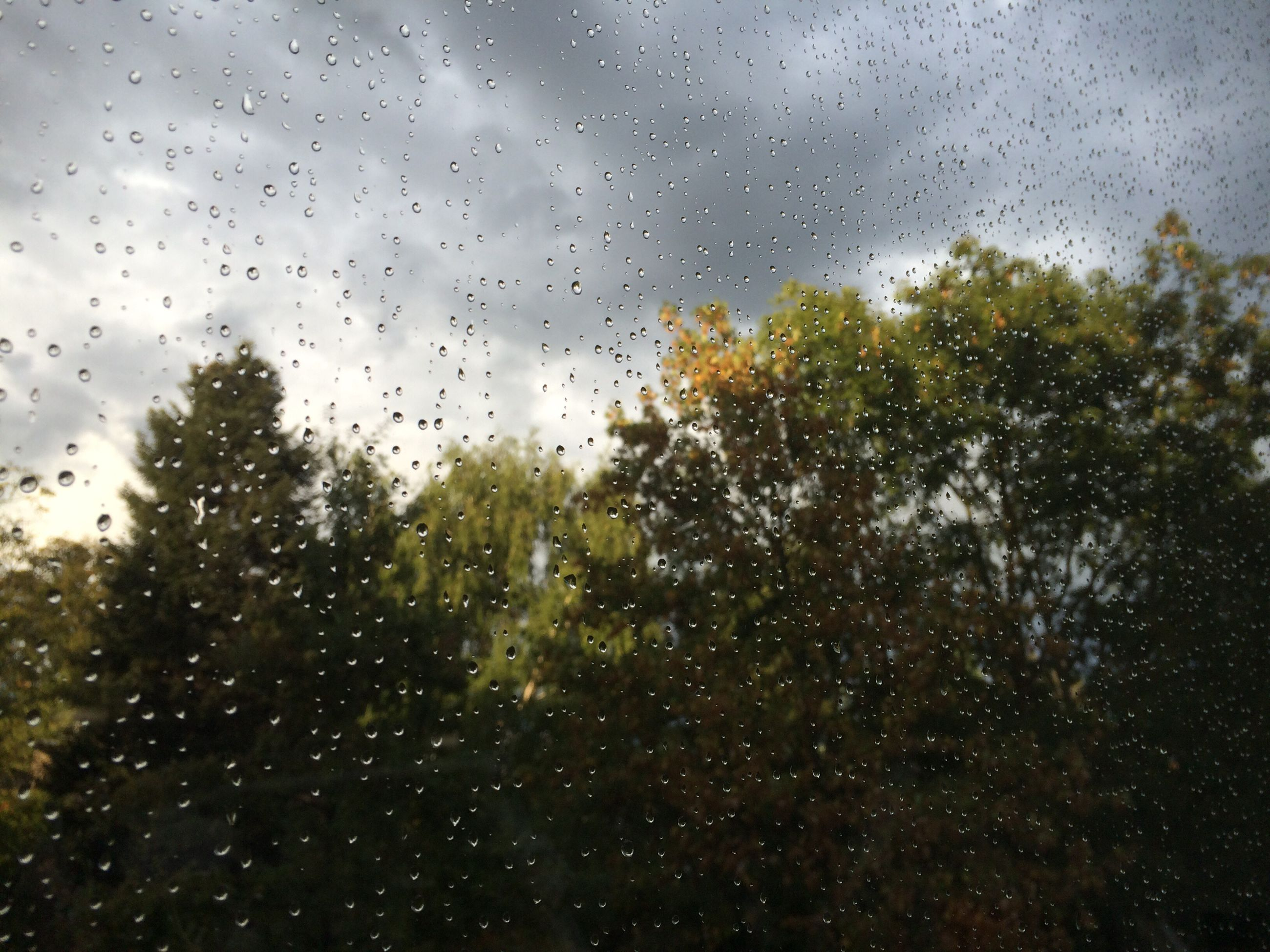window, wet, drop, indoors, water, transparent, glass - material, rain, sky, tree, focus on foreground, nature, cloud, full frame, day, no people, scenics, tranquility, beauty in nature