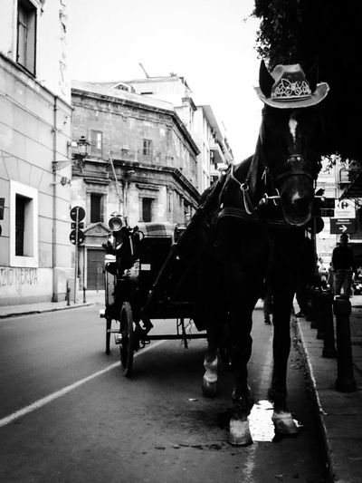 EyeEm Gallery Urbanphotography Photography EyeEm Best Shots Eyeemmasterclass Walking Around The City  City Street Photooftheday Italy Street Photography Sicily British Culture Horse Cart City Horsedrawn Street Riding Horse Working Animal Architecture Built Structure Building Exterior Moving Old Town Townhouse