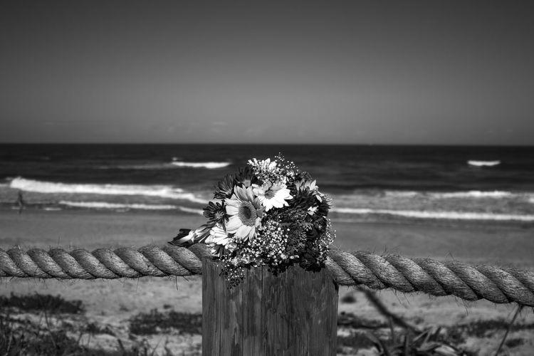 Beach Wedding Daisies Florida Wedding Wedding Wedding Bouquet Wedding Photography Beach Black And White Bouquet Bouquet Of Flowers Daisys Day Florida Nature No People Sand Sand And Sea Sand And Surf Sand Ans Sea Seashells Shells Sunflowers Waves Wedding Bouquet On The Beach Wedding On The Beach
