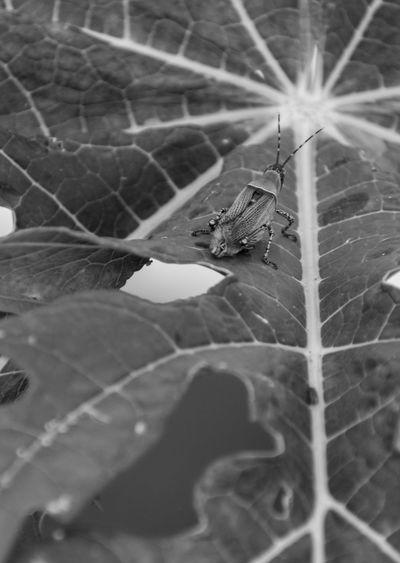 Grasshoper on a
