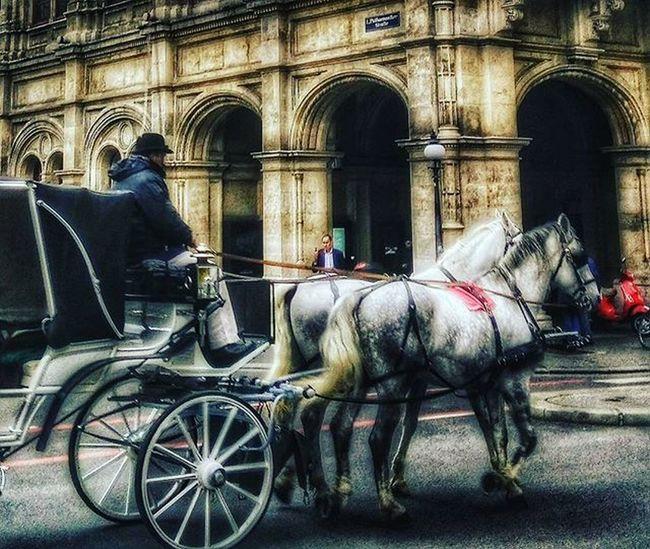 Wien Vienna Wienerstaatsoper Opéra Fiaker Pferd Pferde Horse Horses Austria Österreich Schmäh Historic Historisch Kutsche Lovely Picoftheday Urban Architektur Architecture Straße Street