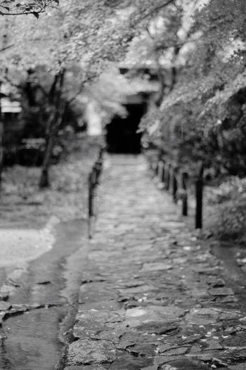 Blackandwhite Black And White Rengeji Kyoto Kyoto,japan EyeEm Gallery Black & White Pentaxk7 Monochrome Bw_lovers Bw_collection Pentax Planar50/1.4 BW Collection TENPLES