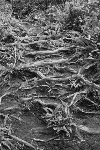 Full frame shot of tree roots on field
