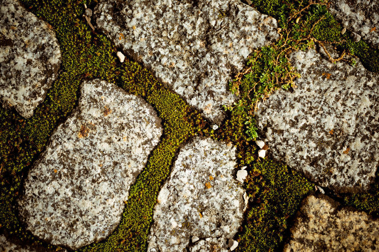 Full frame shot of moss growing on rock