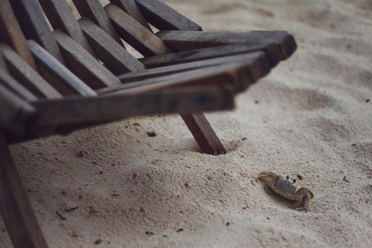 Beach Photography Crab Mexico Tulum Mexico Wildlife & Nature Beach Beach Furniture Sand