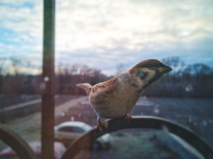 #sparrow Pets