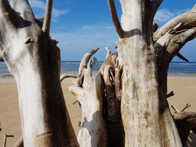 drifting Drifting Drifting Away Driftwood Blue Sky Sri Lanka Tourism Tourist No People Sunny Day Sunny Beach Wood - Material Sea Day Tree Trunk Nature Outdoors Sand No People Sunlight Horizon Over Water Water Tree Beauty In Nature Scenics Sky