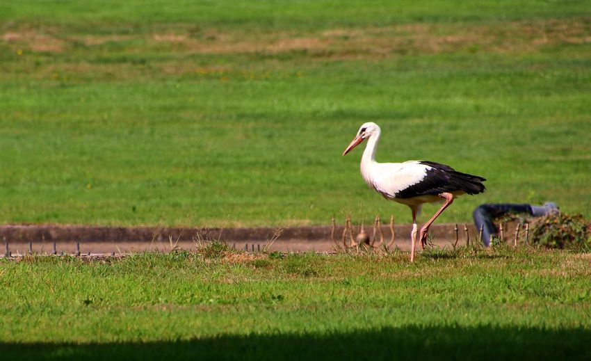 storch zoo