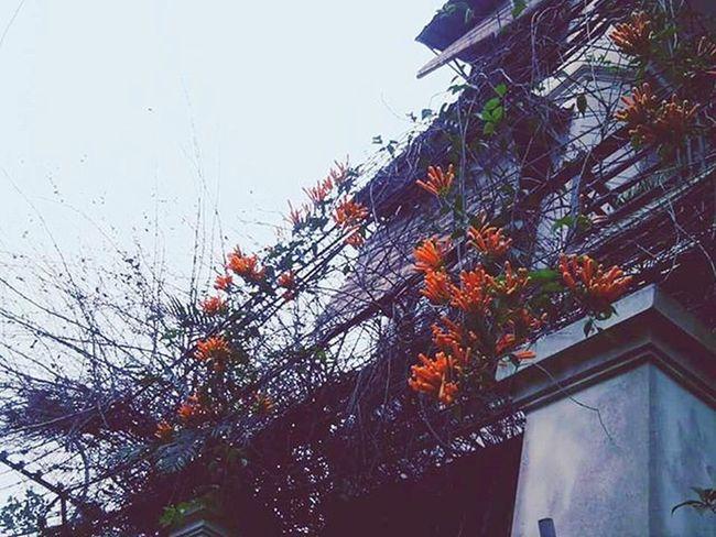 Lạnh thì năm nào cũng là Lạnh. Có khác chăng là Cảm giác mỗi năm mỗi khác... Hanoi Muadong Hoa Flower Cold Outside Camgiac Byminnsonn