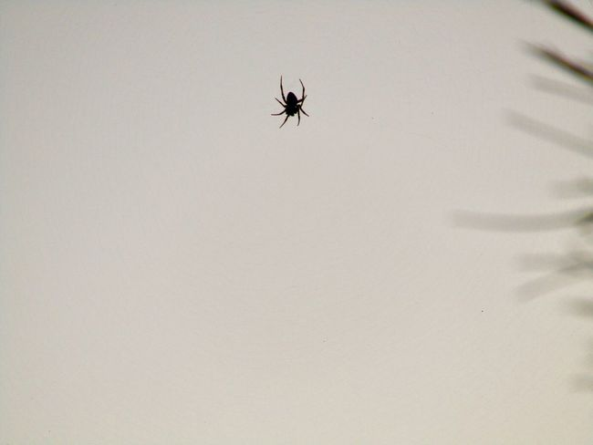 Animal Themes Animals In The Wild Animal Wildlife Spider No People Close-up Outdoors Nature Bug