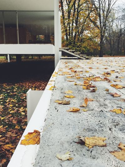 Farnsworth House Mies Van Der Rohe Museum Architecture Fall Nature