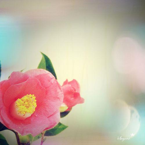 職場に綺麗なお花。 Pink New Photography Cute Japan Photography Flowers