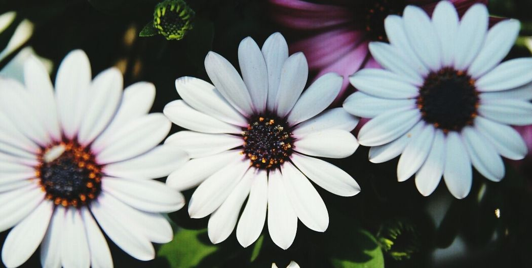Flower Spring Sunshine April 1 @korea seoul joonggok-dong @Canon EOS-M/40mm f2.8