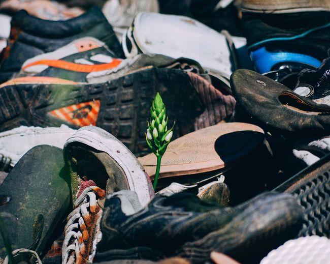Buds amidst footwear