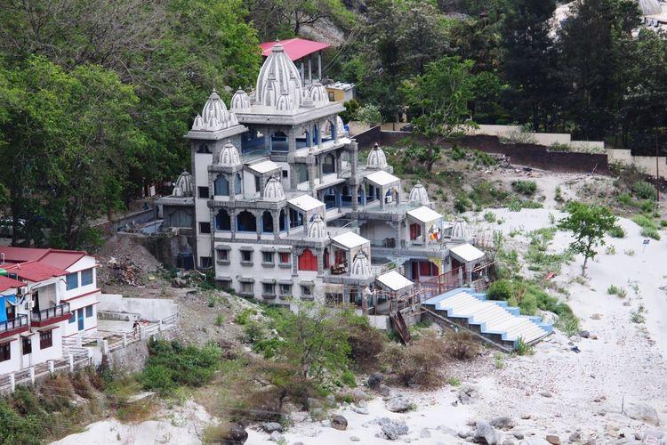 Ganga Ghat Tree