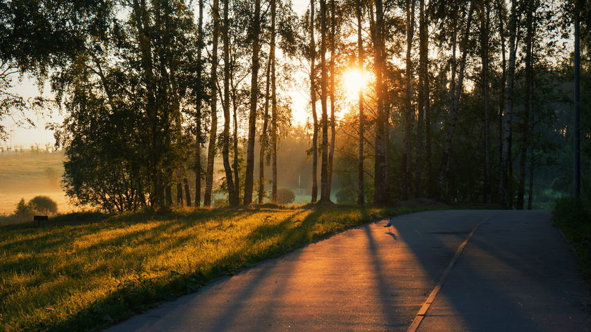 Tree Sunbeam The Way Forward Sunlight Outdoors Nature Beauty In Nature No People Road Sunset Sky Day Leaf Summer Road Tripping A New Beginning A New Perspective On Life Capture Tomorrow