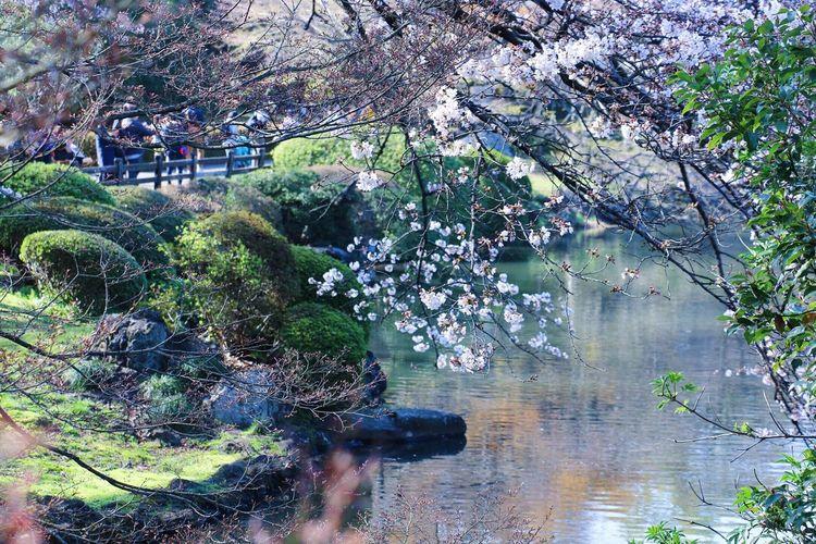 EyeEm Tokyo MeetUp 12 EyeEm Nature Lover VSCO Vscocam Taking Photos Urban Spring Fever Spring Sakura Cherry Blossoms Sakura2016