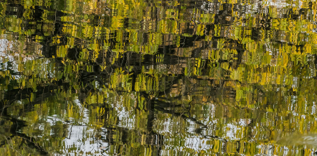 Full Frame Shot Of Rippled Water With Reflection Of Trees