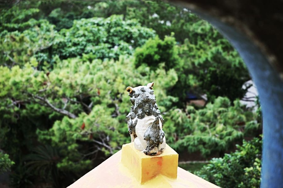 No People Tree Day Outdoors Nature Close-up Okinawa KURUMA 沖縄 Miyako 宮古島 来間島 シーサー 竜宮展望台