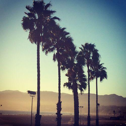 California California Love Santa Monica Palm Trees Love ♥ MyPhotography Landscape Landscape_Collection Beachphotography Beach Life