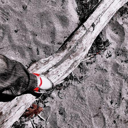 Just Playing Around Beach Driftwood