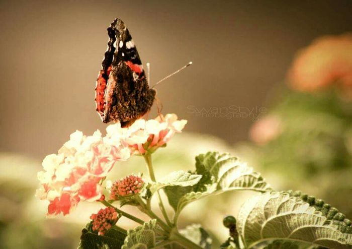 Old Shots Butterfly Grandmas Garden EyeEm Nature Lover Colors And Bugs Day Light Wonderful World Green And Beauty Mother Nature