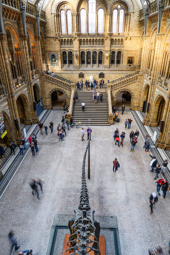 Architecture Natural History Museum Museum Arch Historic Landmark Victorian Victorian Architecture Gothic London London Architecture Real People Tourists High Angle View Dinosaur Dippy Diplodocus EyeEm LOST IN London