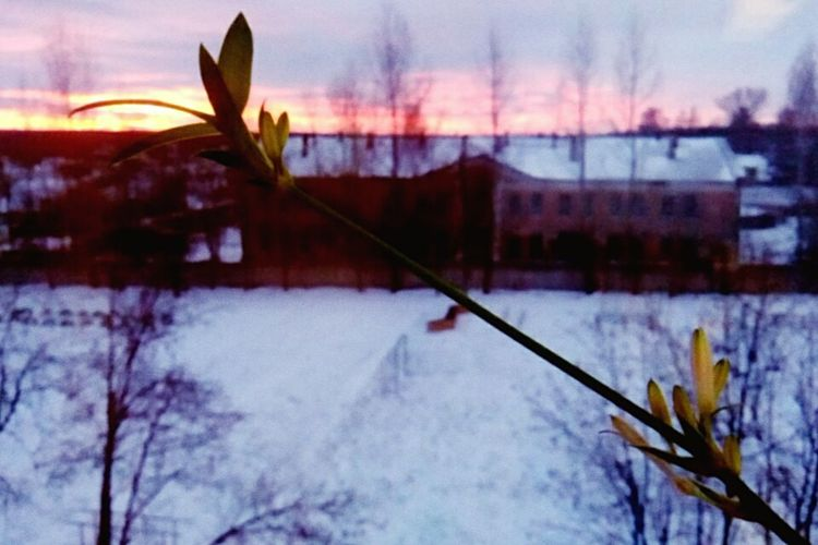 Sunset Winter No People Reflection Nature Tree Plant Outdoors Cold Temperature Snow Sky Scenics Beauty In Nature Dawn Bare Tree Close-up Day