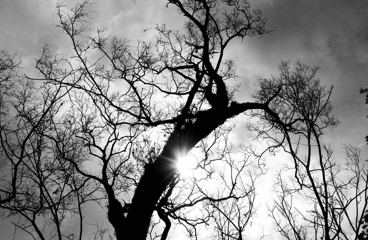 January, 2017. Tree Sky Silhouette Bare Tree Nature Branch No People Outdoors Day EyeEmBestPics EyeEm Best Shots Beauty In Nature Black & White Photography Blackandwhitephoto Bandung, West Java INDONESIA