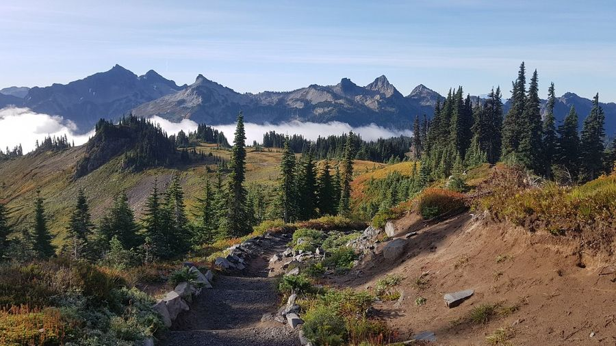 Hiking over clouds in mount rainier national park - scenic view of trees and mountains against sky
