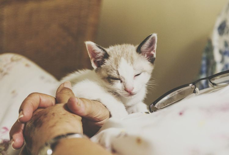 Human Body Part Human Hand Eyes Closed  Pets Domestic Cat Domestic Animals Mammal One Animal Feline Animal Themes Cute Whisker Kitten Close-up Pet Portraits Catoftheday Cats Of EyeEm Cat Lovers Cat Young Animal Portrait Sleeping EyeEmNewHere The Week On EyeEm Domestic Room