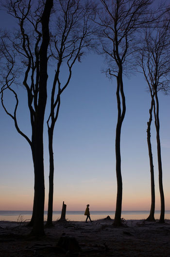 Silhouette trees on beach against sky at sunset
