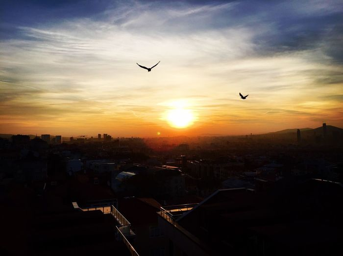 Sunset Flying Building Exterior Sky Silhouette City Bird Built Structure Architecture Animal Themes Cloud - Sky No People Sun Cityscape Nature Airplane Outdoors First Eyeem Photo EyeEm Gallery EyeEmBestPics EyeEm Tourism Eyeemphotography EyeEm Best Shots - Nature EyeEm Nature Lover