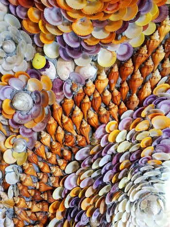 Bring colorful shells to the background. Bring Colorful Shells To The Background. Colors On The Shell Beautification